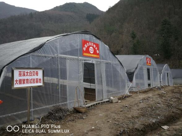 巫溪太白贝母大棚繁育试验基地
